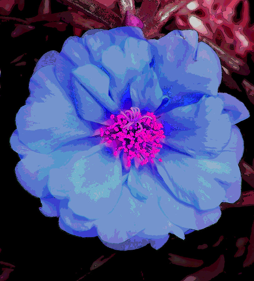 Abstract Blue Flower With Pink Center Photograph by Mary ...