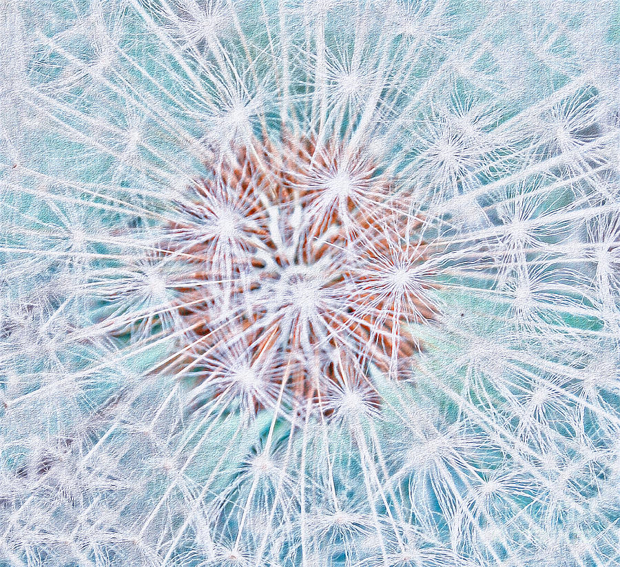 Abstract Dandelion Photograph  - Abstract Dandelion Fine Art Print