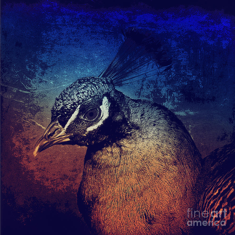Abstract Peacock Photograph  - Abstract Peacock Fine Art Print