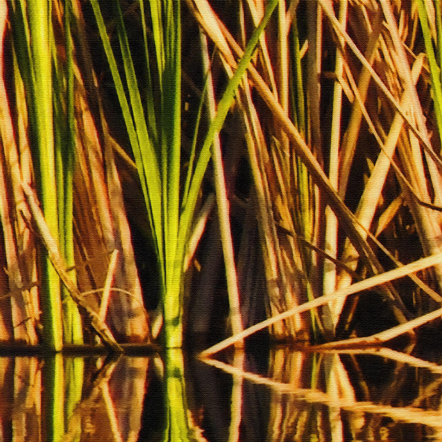 Abstract Reeds Triptych Top Photograph