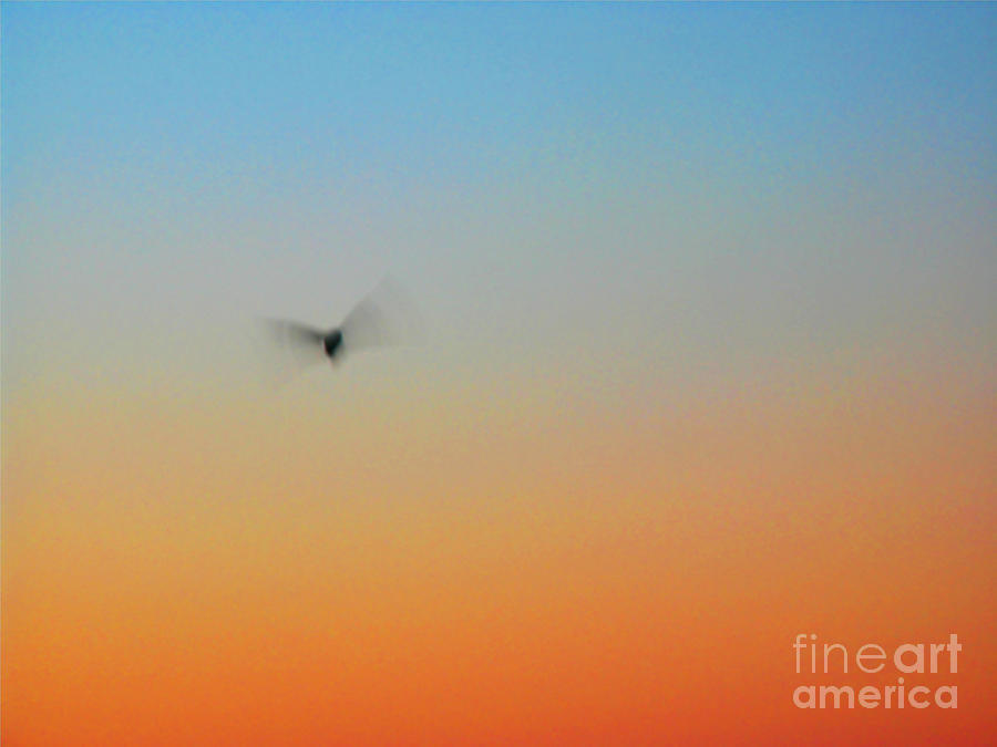 Abstract Skyscape Photograph
