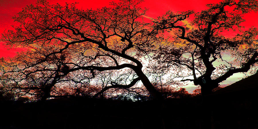 Abstract Trees Red Sky Painting