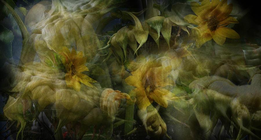 Abundance Digital Art