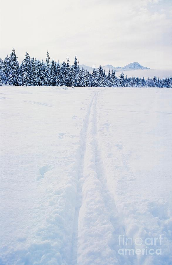 Across The Winter Landscape Photograph