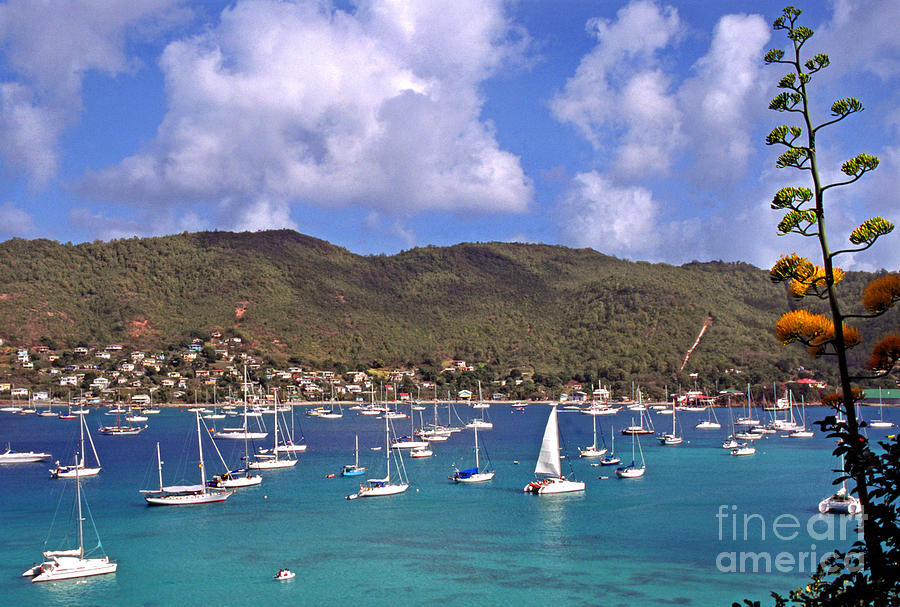 Admiralty Bay Photograph  - Admiralty Bay Fine Art Print