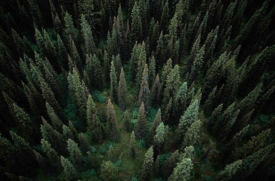 aerial-view-of-an-evergreen-forest-paul-