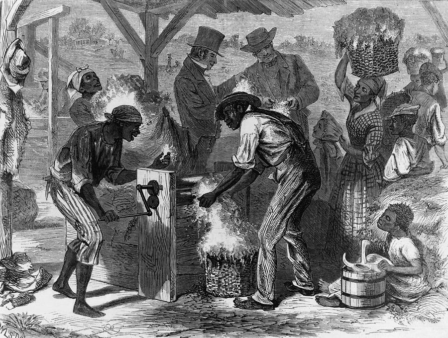 African American Slaves Using A Cotton Photograph  - African American Slaves Using A Cotton Fine Art Print