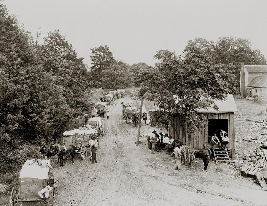 African Americans And Mule Drawn Wagons Photograph