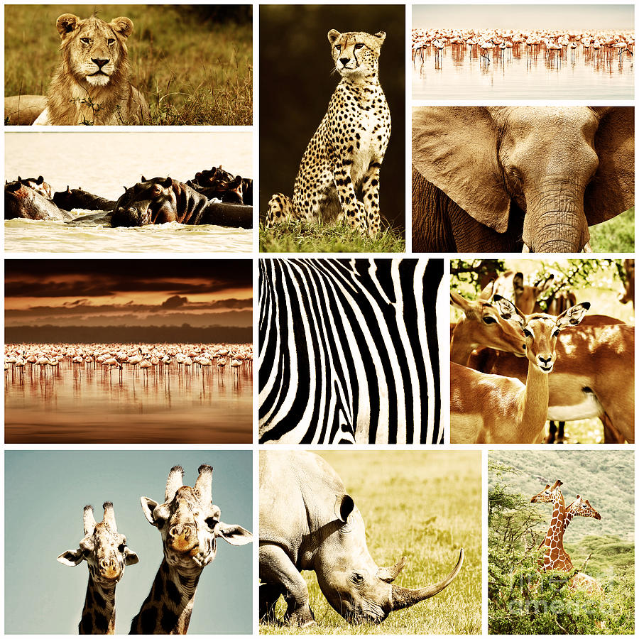 African Animals Safari Collage  Photograph