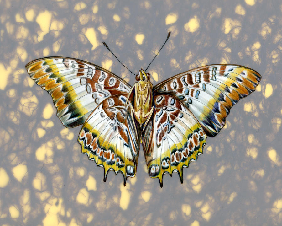 African Butterfly Painting