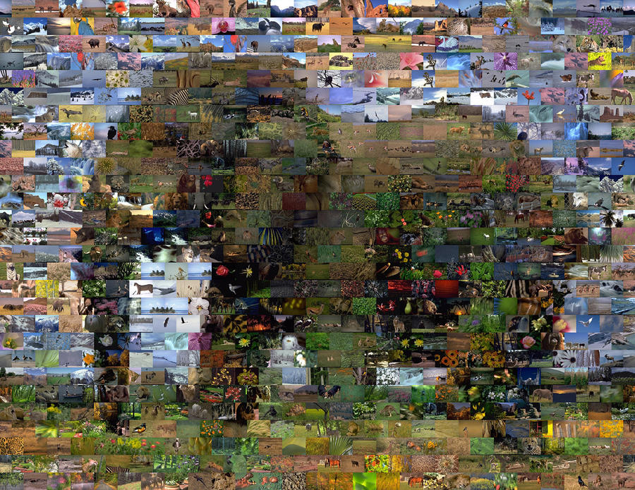 African Elephant Wild Animal Mosaic Mixed Media  - African Elephant Wild Animal Mosaic Fine Art Print