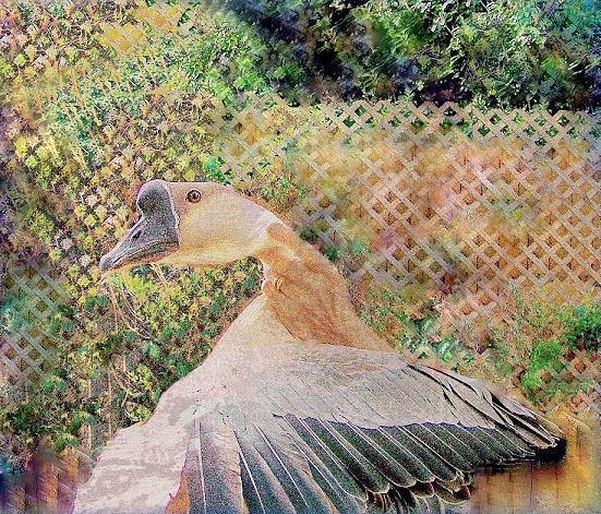 African Goose Mixed Media - African Goose  by YoMamaBird Rhonda