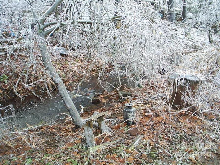 After The Ice Storm In Maine Photograph