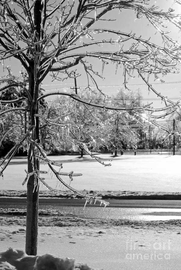 After The Ice Storm Photograph  - After The Ice Storm Fine Art Print