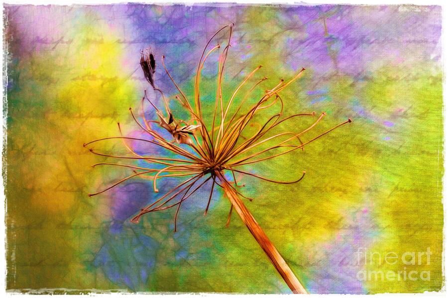 Agapanthus Photograph - Agapanthus by Judi Bagwell