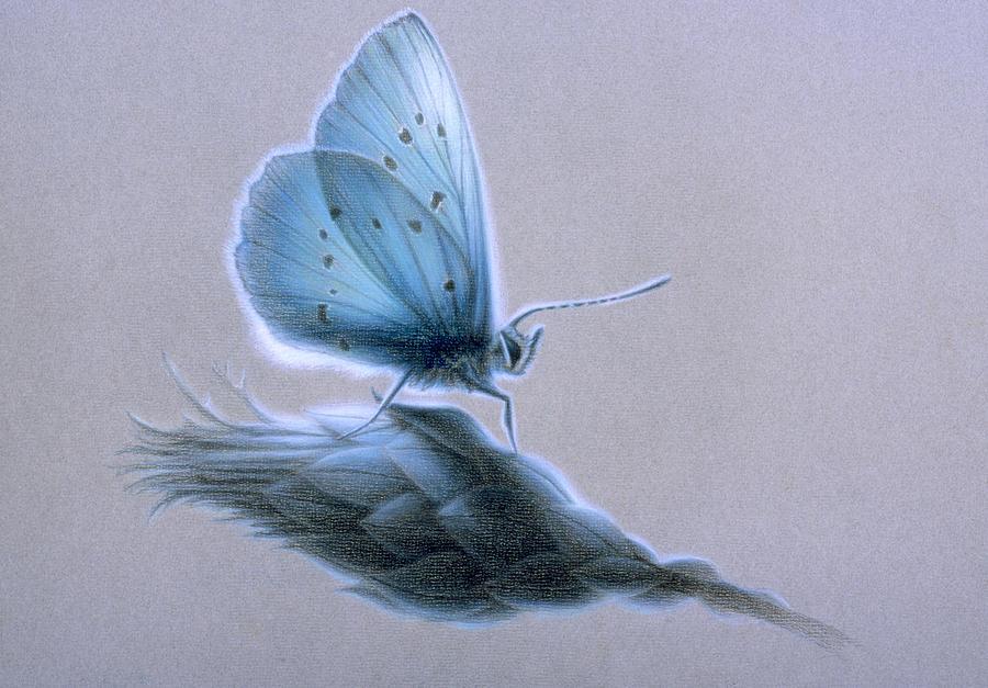 Ainsae Painting