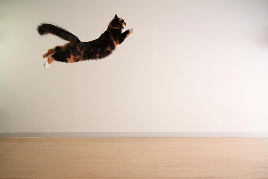Airborne Cat Photograph