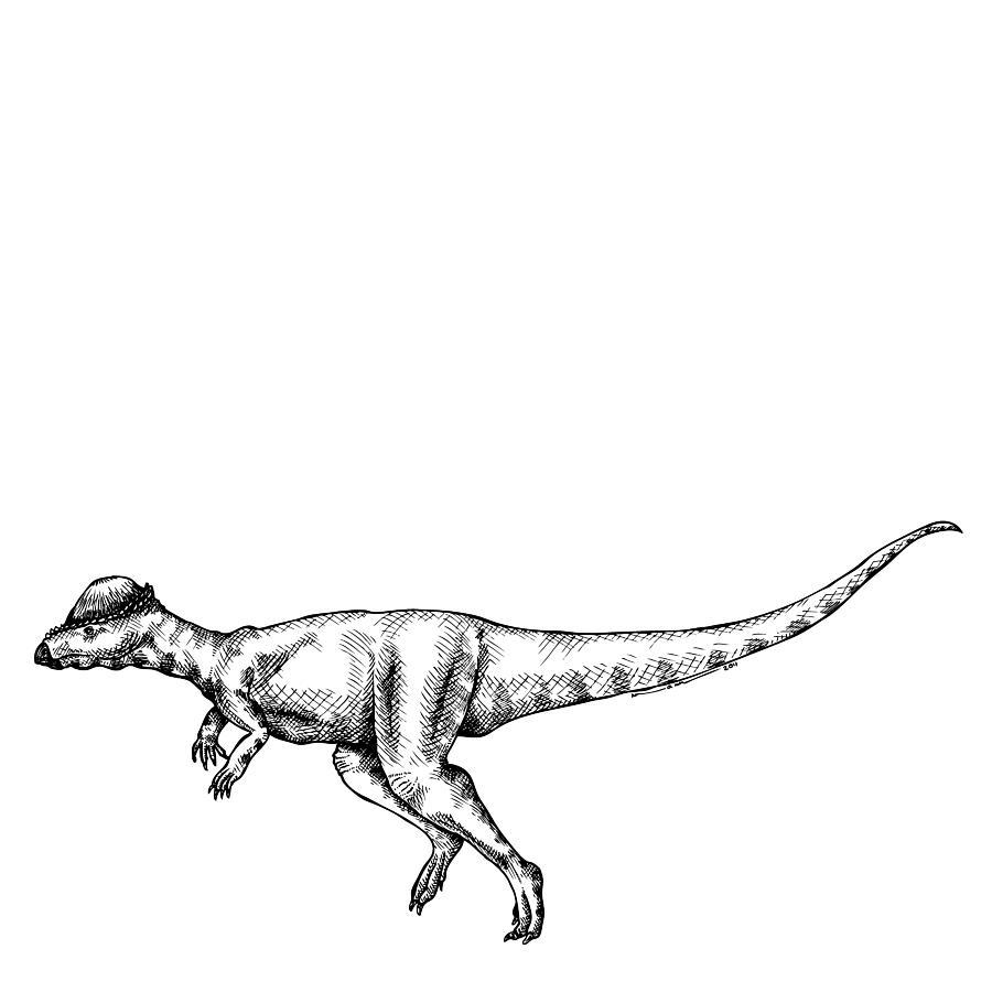Alaskacephale Dinosaur Drawing