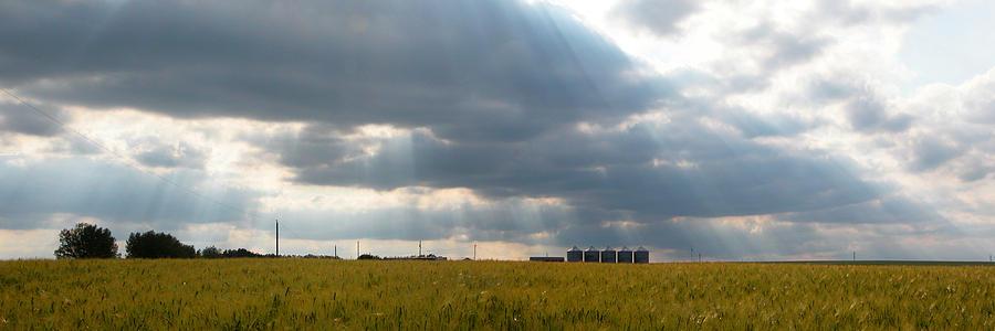 Alberta Wheat Field Photograph
