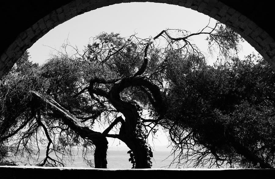 Alcatraz Photograph - Alcatraz Tree by Ty Helbach