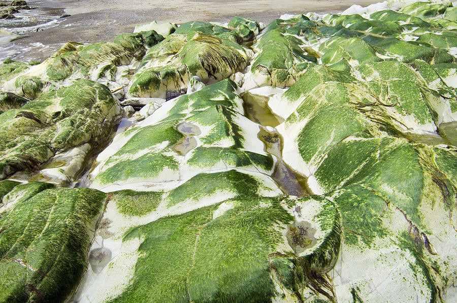 Algae Covered Rocks Photograph