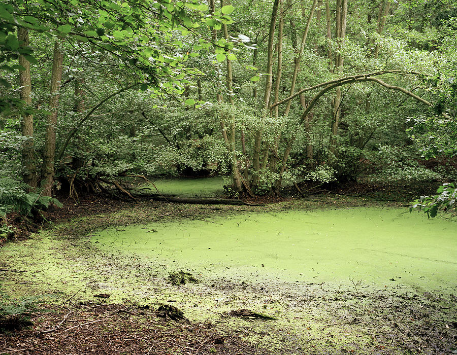Algal Bloom In Pond Photograph