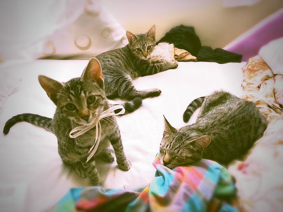 Kittens Photograph - All 3 Kittens Together  by Gemma Geluz
