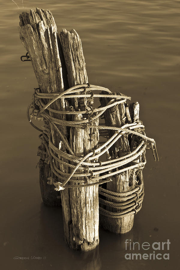 All Tied Up Photograph  - All Tied Up Fine Art Print