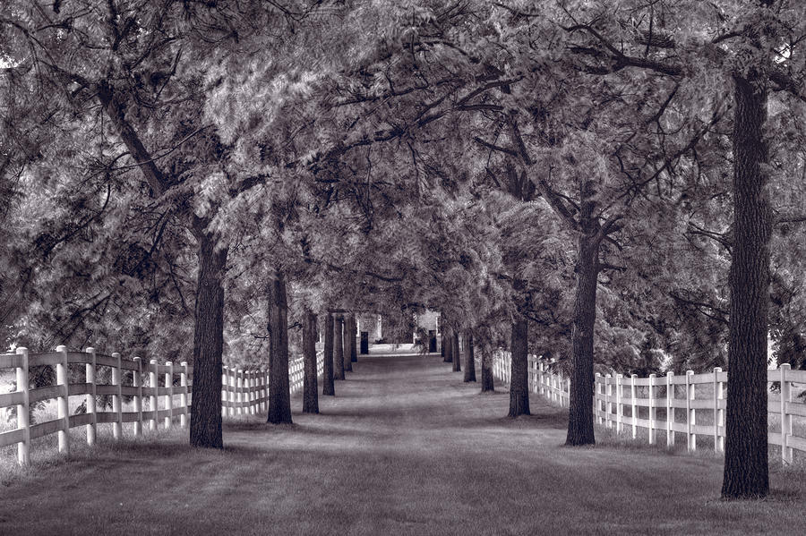 Allee Way Bw Photograph