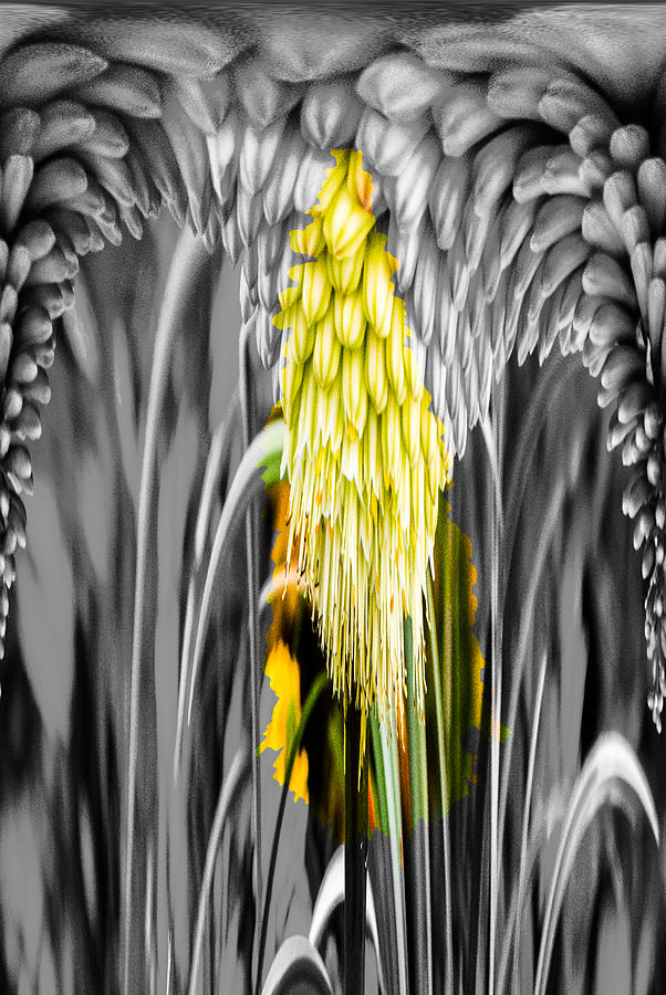 Aloe 4 Dripper Photograph  - Aloe 4 Dripper Fine Art Print