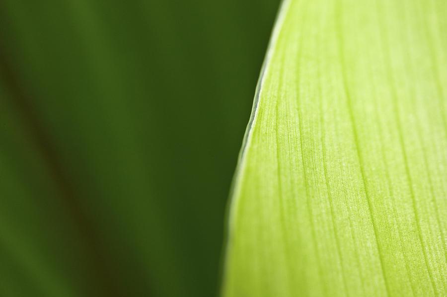 Leaf Edge Photograph - Along The Edge by Rich Franco