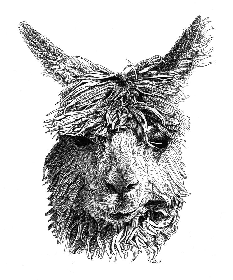 Alpaca by Scott Woyak