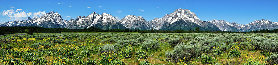 Alpine Meadow Teton Panorama II Photograph  - Alpine Meadow Teton Panorama II Fine Art Print