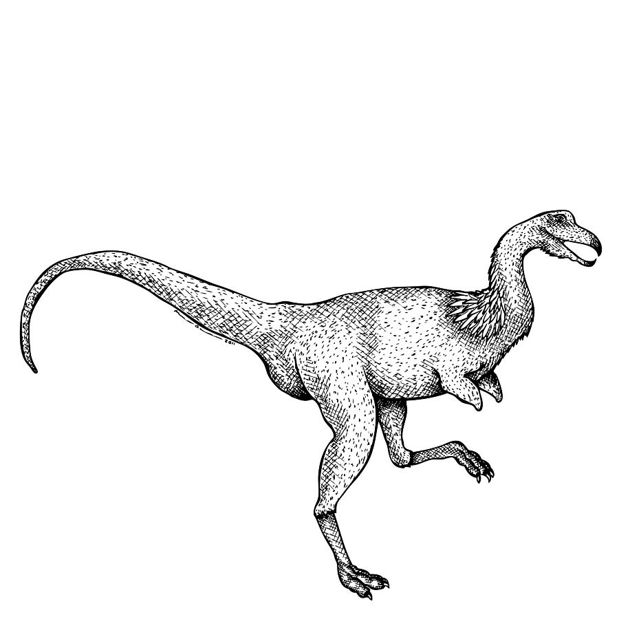 Cartoon Drawing - Alvarezsaurus - Dinosaur by Karl Addison