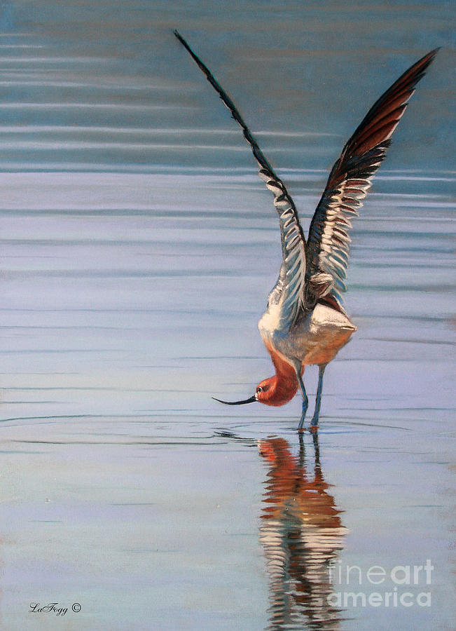 Bird Painting - American Avecet by Deb LaFogg-Docherty