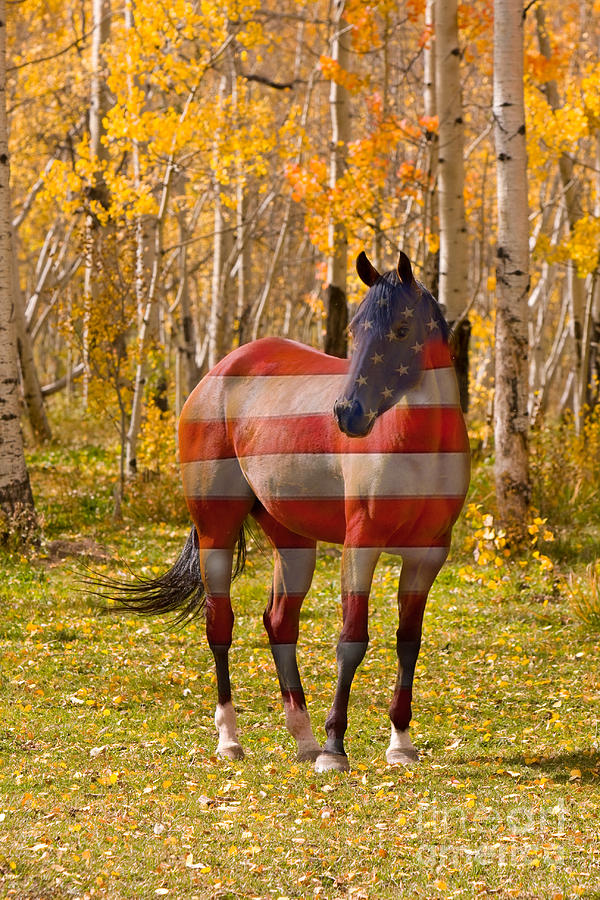 American; America; Usa; Flags; Horses;  Red White And Blue' Photograph - American Bred by James BO  Insogna