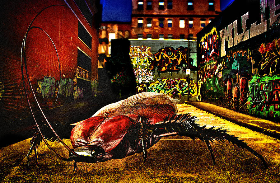 American Cockroach Mixed Media  - American Cockroach Fine Art Print
