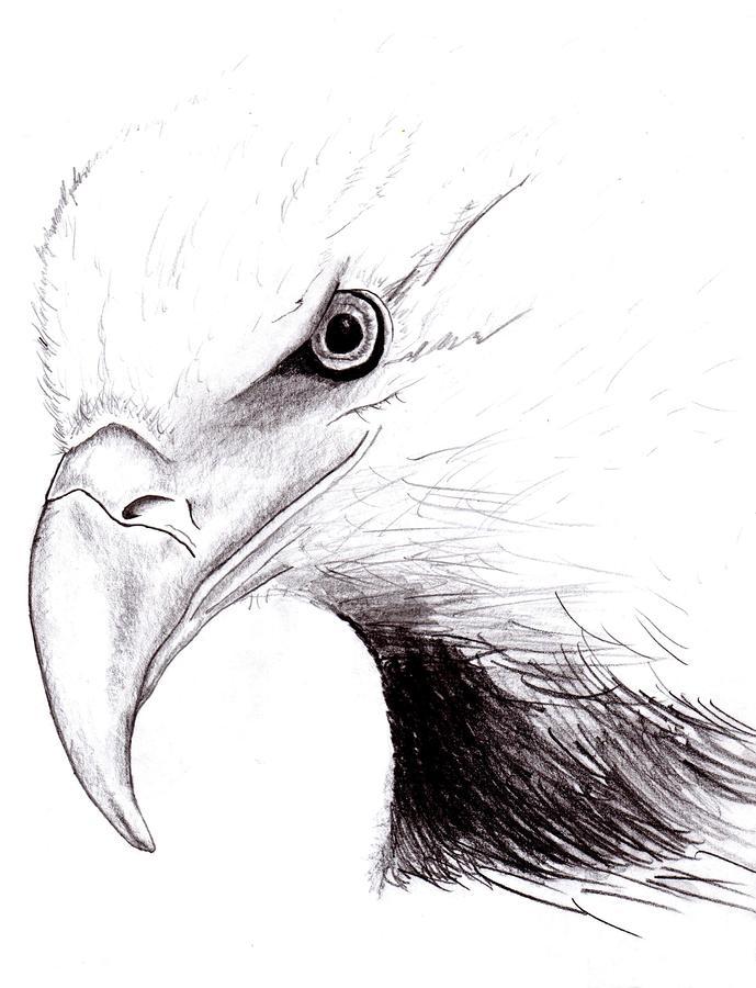 Realistic Eagle Head Drawings