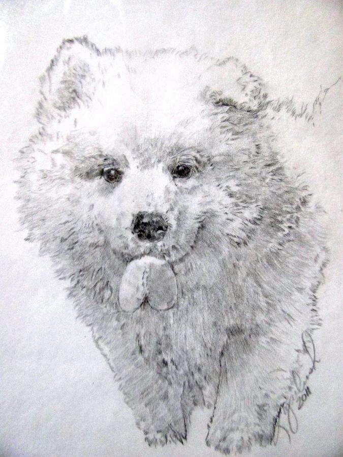 American Eskimo Puppy with Leaf Drawing - American Eskimo Puppy with ...