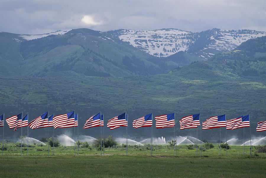 American Flags Honoring Veterans Photograph