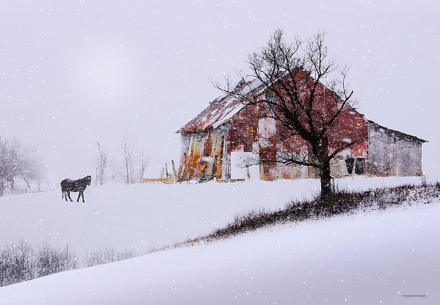 American Pastoral Photograph