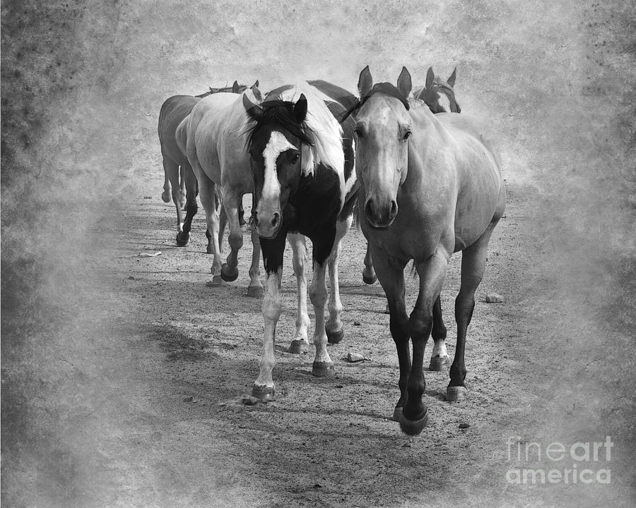 American Quarter Horse Herd In Black And White Photograph  - American Quarter Horse Herd In Black And White Fine Art Print