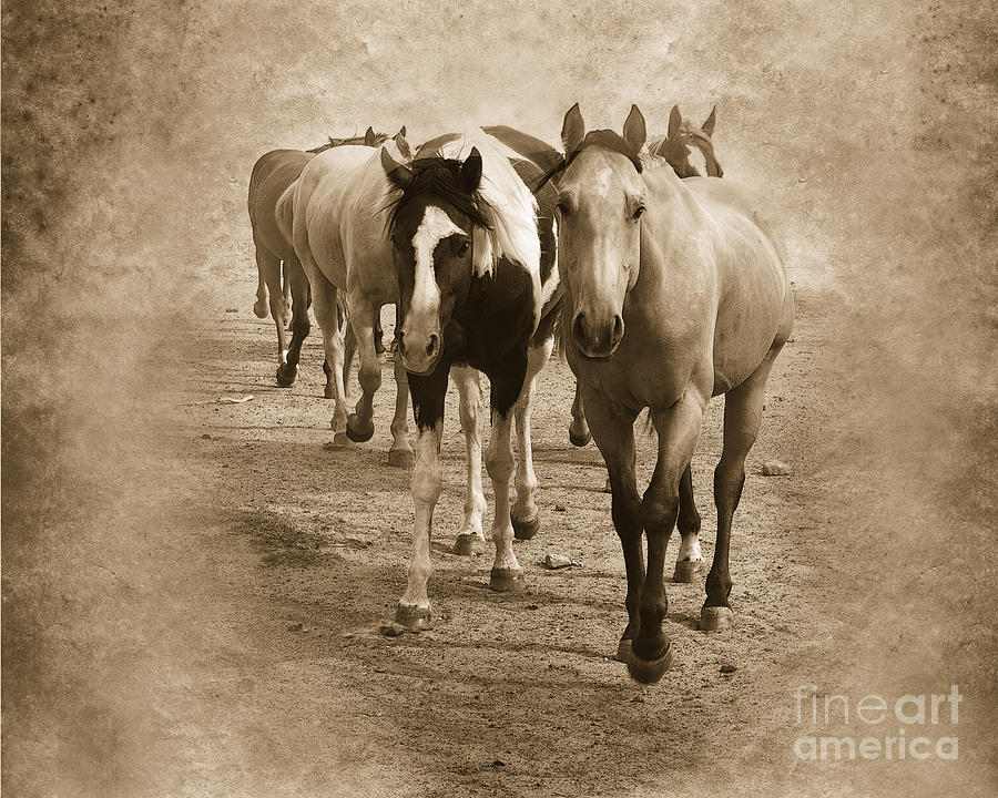 American Quarter Horse Herd In Sepia Photograph