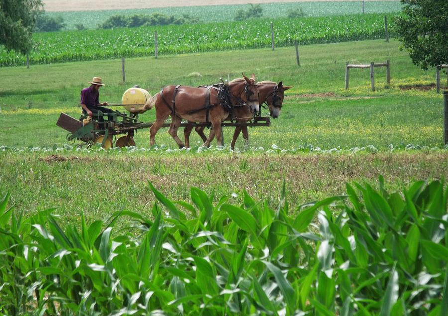 Amish At Work Photograph