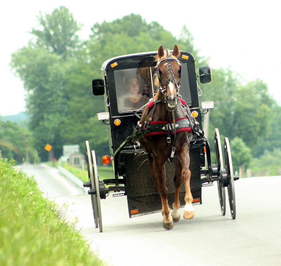 Amish Buggy On The Road Photograph  - Amish Buggy On The Road Fine Art Print