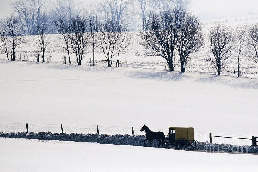 Amish Horse And Buggy In Snowy Landscape Photograph