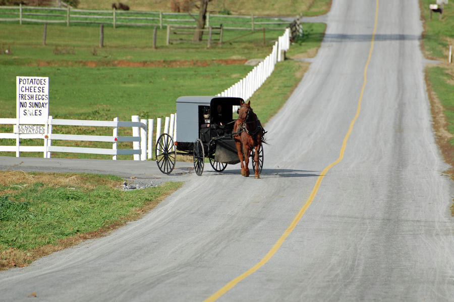 Amish Life Photograph