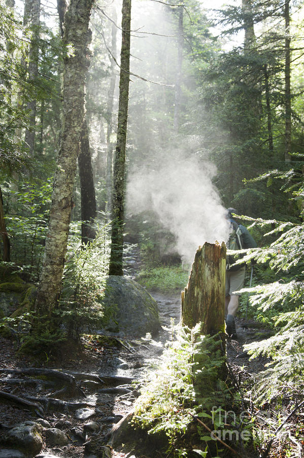 Ammonoosuc Ravine Trail - White Mountains New Hampshire Usa Photograph