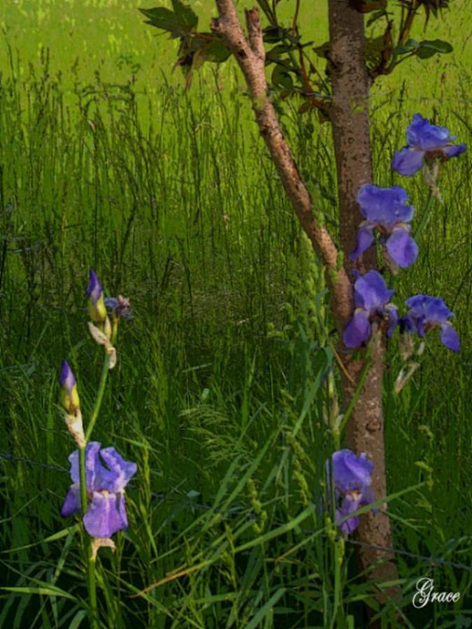 Among The Grasses Photograph
