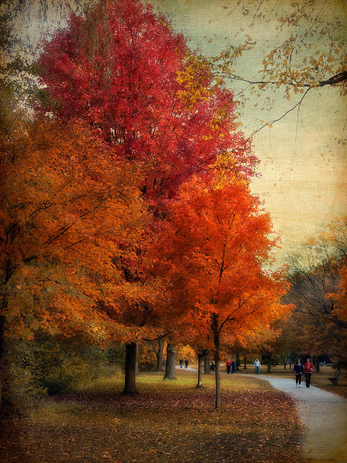 Among The Maples Photograph  - Among The Maples Fine Art Print